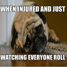 You don't want to be the sad pug :(